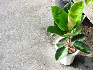オフィス,観葉植物,空間デザイン,リラックス
